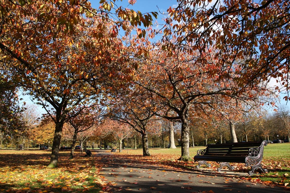 Greenwich Park In Autumn Colors